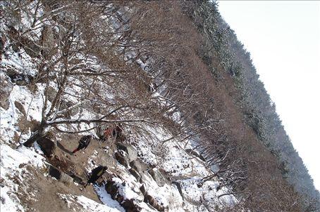 Mt. Geumjeong