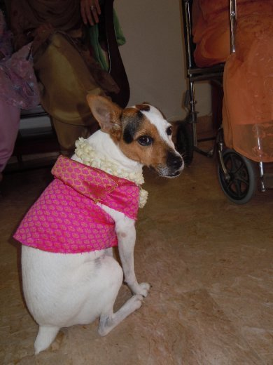 even the dog got an outfit - thanks to my sister :)