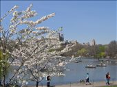 Couldn't find a cloud to save myself at Central Park.: by aptyson, Views[217]