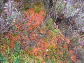 Hope you like the lichen.: by aptyson, Views[136]