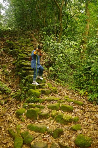 The trek to Living Root Bridge is through mossy, steep downhill path
