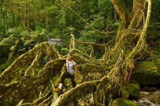 On the Living Root Bridge at Siet - a bio-engineering marvel