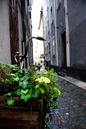 Bikes are one of the main sources for transport in Sweden. This was taken in one of the side streets around stockholm, with this particular bike having been decommissioned for a flower pot a long time ago.
