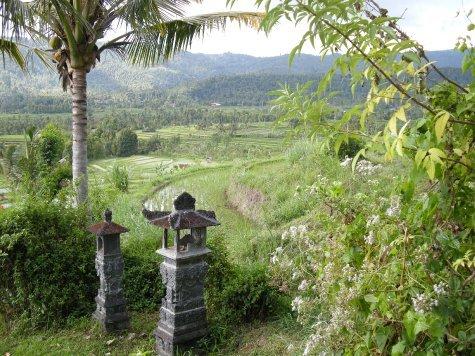 le risaie di Munduk