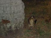Possum: by auaround, Views[310]