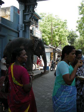 un altro elefante alle prese con benedizioni