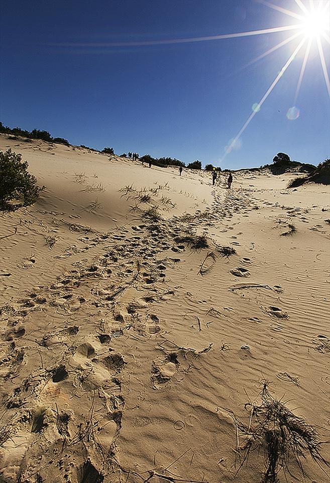Moreton desert