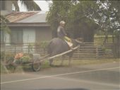 Man riding a carabao- a means of plowing a land: by azwethinkweiz82, Views[440]