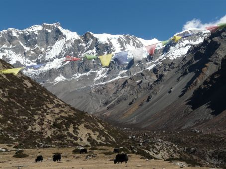 The Chulus, some prayer flags and another horde of yaks.