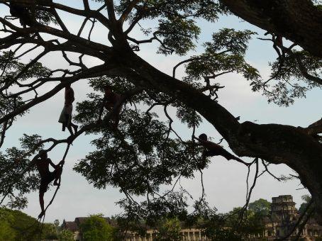 Khmer monkeys... kids playing in a tree.