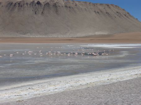 Flamingos!  Did you know they TURN pink cos of the red algae they eat?!  Well I didn´t.