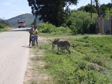 Bolivians, burros and big trucks.