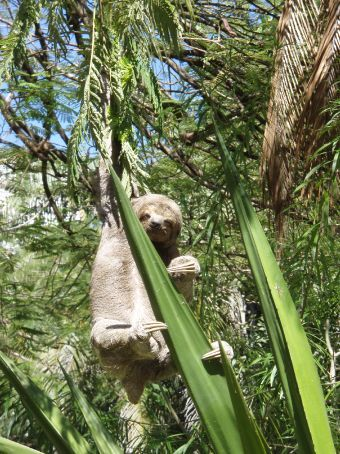 Sloth doing what sloths do, just hanging around