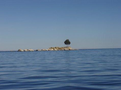 Tree.  On an island.  On a lake.