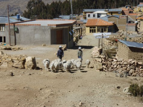 Another day of chores for the lads.  Isla del Sol was peppered with  the constant sounds of bleating, moo-eeting (weird llama sound) and funniest of all... the anguished braying of burros (donkeys).