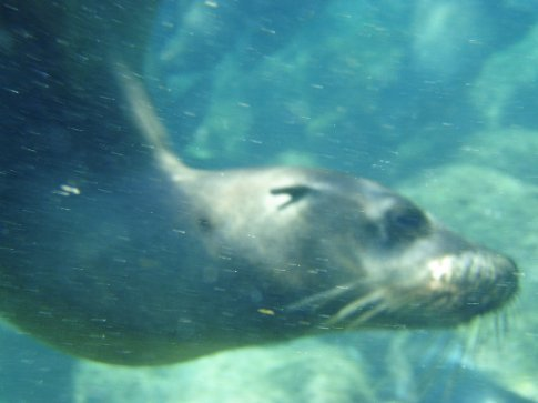 Swimming with these guys was SUCH a treat!  Friendly, curious, playful and just so agile!!