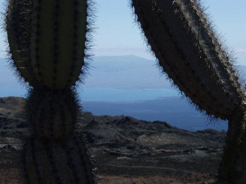 Volcano cacti