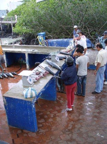Fish market in Puerto Ayora (Isla Santa Cruz)