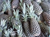 Pineapples! : by bagen, Views[238]