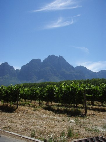 Vineyards and mountains, need we say more.