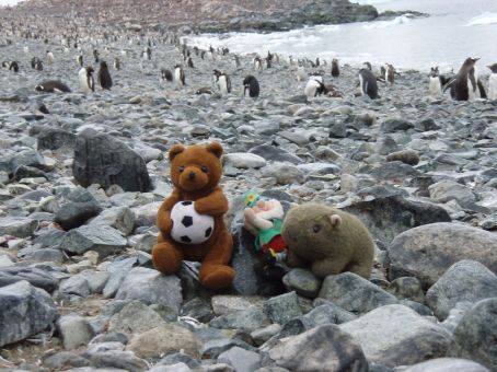 Bear, Eric, Finningan and Gentoo penguins