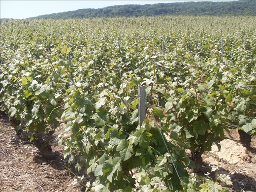 Champagne's fields in northern France.