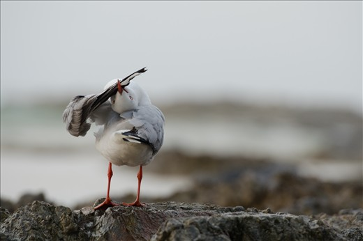 Seagull Yoga, not pests at all but genuine beach characters.