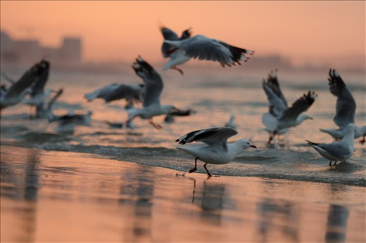A flock of gulls takes flight at dusk.