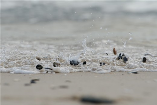 The tinkling of Dancing Shells on the shore.