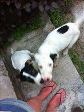 puppy dogs: by beachbound101, Views[255]