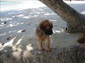 Very cute pooch: by bear, Views[246]