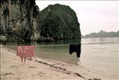 Castaway Island Adventure: by bebacastellan, Views[113]