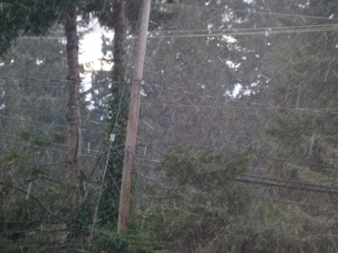 Snowing in Gibsons!