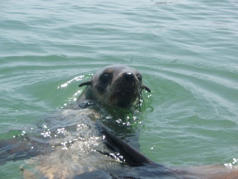 Seals up-close are really cool