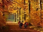 Experiencing the Wald in the Autumn brilliance. : by bechnotechno, Views[1172]