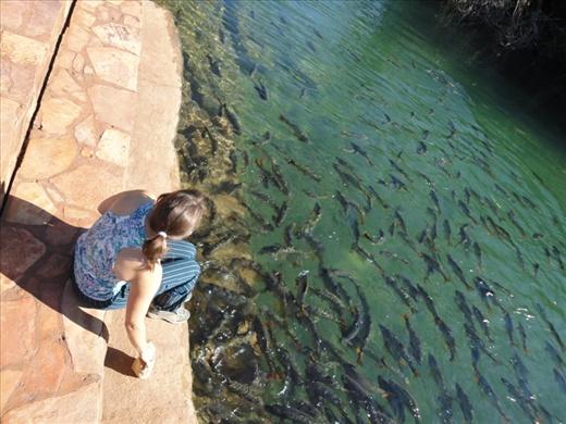 Feeding the fish in the municipal park at Bonito