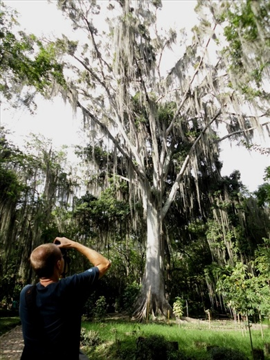 El Gallineral Park, San Gil - trees are covered in moss called