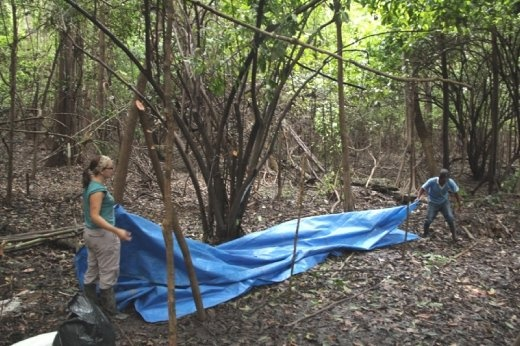 Making our shelter for a night camping in the rainforest