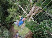 Climbing 35m up to the canopy top, Tanimboca Reserve, Leticia: by beckandphil, Views[1315]