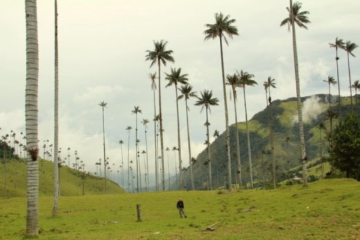 Phil with 60m Wax Palms in Valle de Cocora