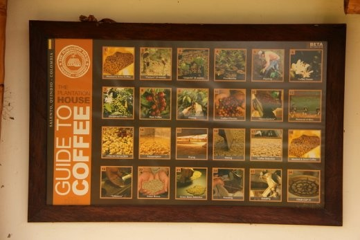 Coffee Plantation tour in Salento - all the steps involved in going from a coffee seed into a finished cup of coffee