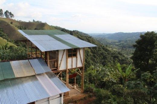 Coffee plantation view, Salento