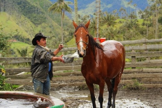 Farmer washing his horse, Carbonera Valley