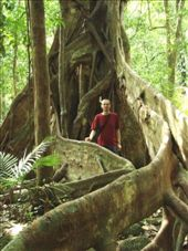 Buttress roots, Daintree Rainforest: by beckandphil, Views[1149]