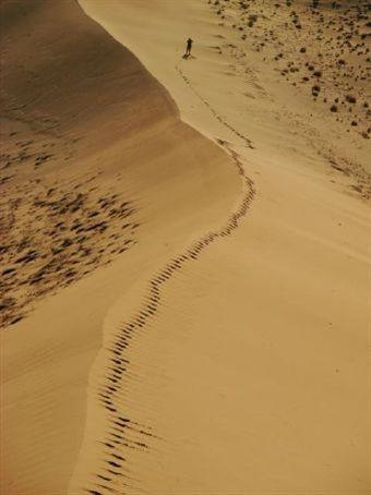 Descending Dune 45, Namib Desert