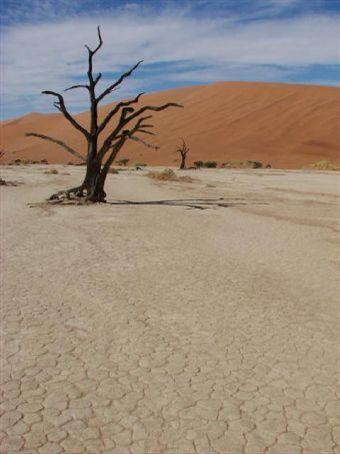 Dead Vlei, Namib Desert (petrified trees)