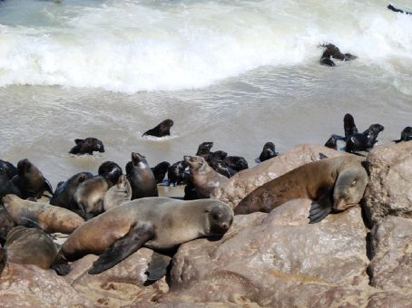 Cape Cross Seal Colony, Namibia