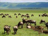 Ngorongoro Crater NP: by beckandphil, Views[284]