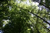 Canopy  - sun filters through the trees creating fabulous light: by beco, Views[93]