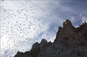 There is continuous frenzied activity at the Akpait bird cliff as adults fly from their nests to feed at sea and then bring back food for their young chicks. The traffic is fast and furious. Sometimes large groups of kittiwakes take flight at the same time, filling the air with their high pitched cries.: by beelover, Views[169]